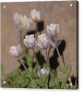 Alpine Flowers Acrylic Print