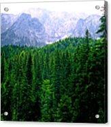 Alpine Forest Acrylic Print