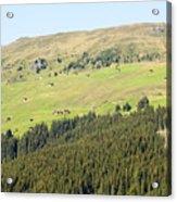 Alpine Forest Landscape.  Acrylic Print