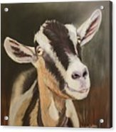 Alpine Goat Acrylic Print