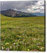 Alpine Meadow Before Mount Guyot Acrylic Print