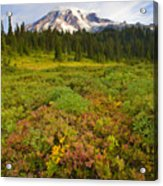Alpine Meadows Acrylic Print