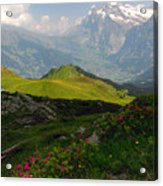Alpine Roses In Foreground Acrylic Print