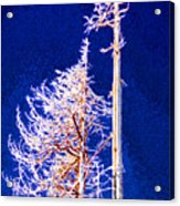 Alpine Snowy Trees 2 Pddbae2 Acrylic Print