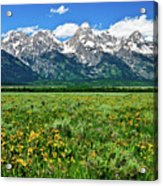 Alpine Spring Acrylic Print