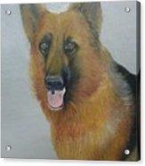 alsheshan Dog  Acrylic Print