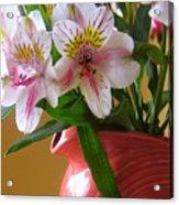 Alstroemeria Fiesta Acrylic Print
