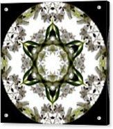 Alstroemeria Wild 2 Acrylic Print