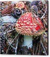 Amanita Mushroom Acrylic Print by Michele Penner