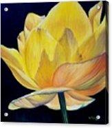 Amarella Acrylic Print