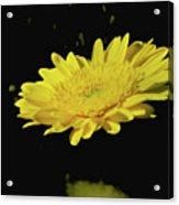 Amarillo 001 Acrylic Print