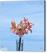Amaryillis Belladonna Against The Spring Florida Sky Acrylic Print