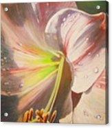 Amarylis Acrylic Print