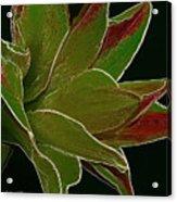 Amaryllis Art Acrylic Print