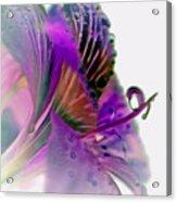 Amaryllis Butterfly II Acrylic Print