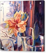 Amaryllis In The Window Acrylic Print