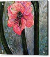 Amaryllis Of Peace Acrylic Print