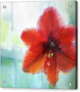 Amaryllis Window Acrylic Print