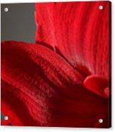 Amaryllisleaves6698 Acrylic Print