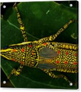 Amazing Insect Acrylic Print