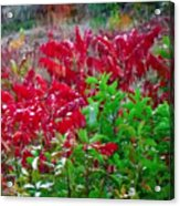Amazing Nature Blessings Magic Colors Cherry Red Green Shrubs Plants Save  The Environment Acrylic Print
