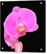 Amazing Pink Orchid With Black Background Orquidea Acrylic Print