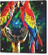 Amazon Parrotts Acrylic Print