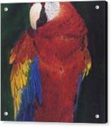 Amazonian Rainbow Acrylic Print