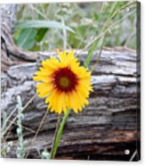 Amber Wheels Blanket Flower Acrylic Print