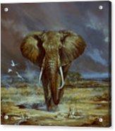 Amboseli Bull Elephant Acrylic Print