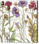 Ambrosia IIi Acrylic Print
