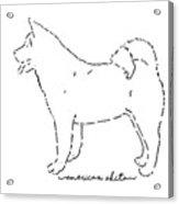 American Akita Sketch Acrylic Print