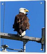 American Bald Eagle On Communication Tower Acrylic Print