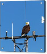 American Bald Eagle Perched On Communication Tower Acrylic Print