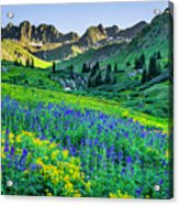 American Basin In Bloom Acrylic Print