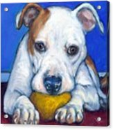 American Bulldog With Yellow Ball Acrylic Print by Dottie Dracos