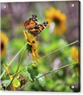 American Lady Butterfly By The Beach Acrylic Print
