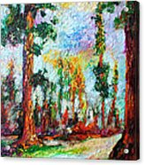 American National Parks Redwood Trees Acrylic Print