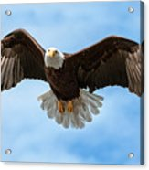 American National Symbol Bald Eagle With Wings Spread Acrylic Print