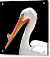 American Pelican Acrylic Print