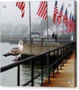 American Seagull Acrylic Print