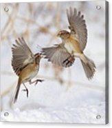 American Tree Sparrows Acrylic Print