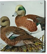 American Widgeons Acrylic Print