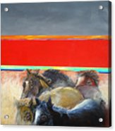 American Wild Horses Herded To Slaughter Acrylic Print
