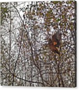 American Woodcock In October Foliage Acrylic Print