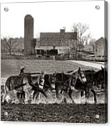 Amish Agriculture  Acrylic Print