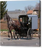 Amish Buggy And High Stepper Acrylic Print