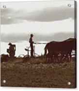 Amish Farmer 2 Acrylic Print