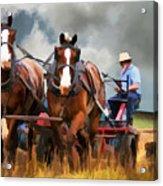 Amish Farmer Acrylic Print by Tom Griffithe