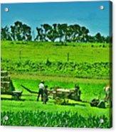Amish Gathering Hay Acrylic Print